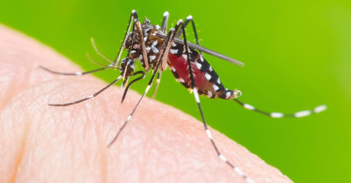 ACIP alerta para o aumento do número de Dengue no município